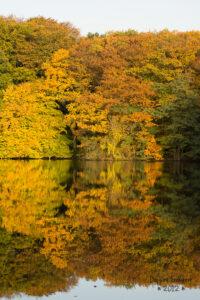Ein bischen Herbst