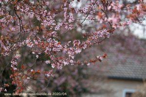 Read more about the article April April