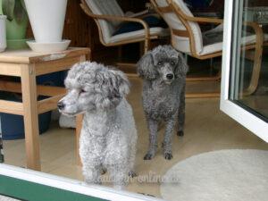 Pia und Lissy vor der Balkontür