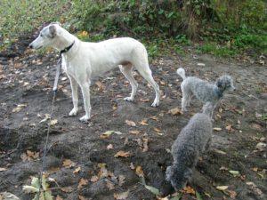 Lissy, Pia und Chorbi im Tangstedter Hundeauslauf