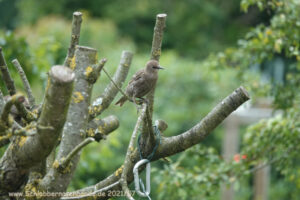 Read more about the article Die Invasion der K…-Vögel